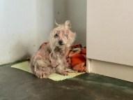 Cachorrinha se recusa a sair de casa após morte de donos e funcionária é contratada para cuidar de animal