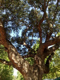 yoga albero