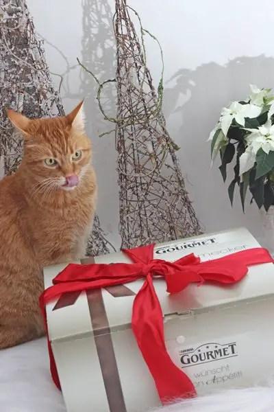 Weihnachtszeit mit unseren beiden Samtpfoten – Gewinne 1 von 5 weihnachtlichen Kollektionsboxen von GOURMET