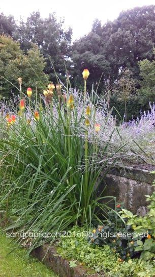 giardino-torregiani-imag0447