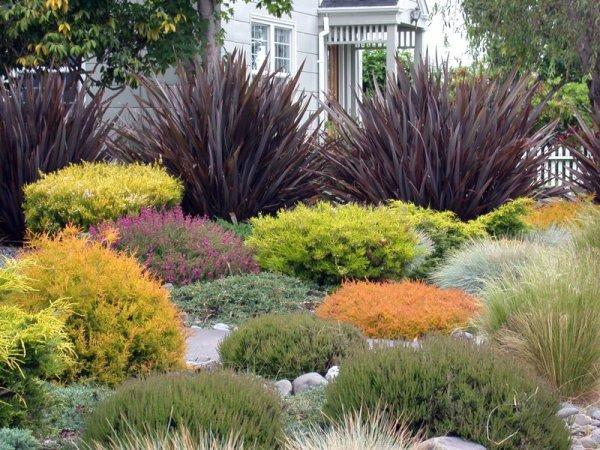 create beautiful drought resistant