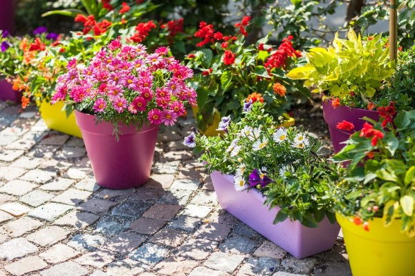 5 perks of growing container