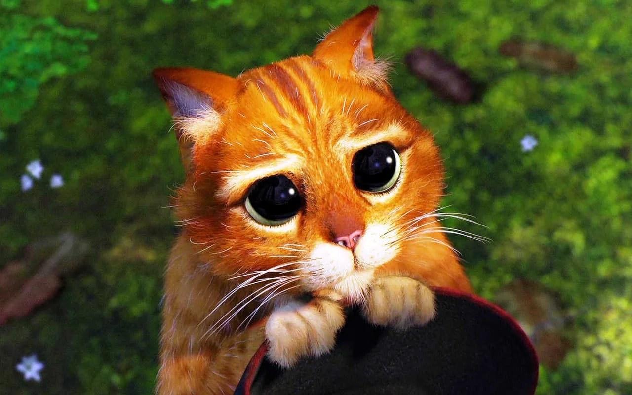 gatito (1)