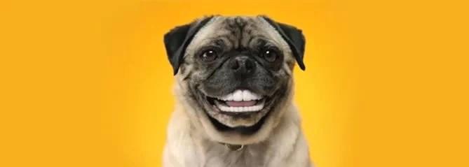 risada-de-cachorro