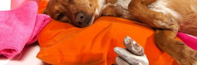 Terapia para Animales