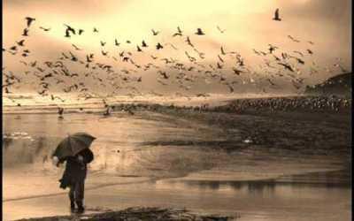 Pájaros de Barro