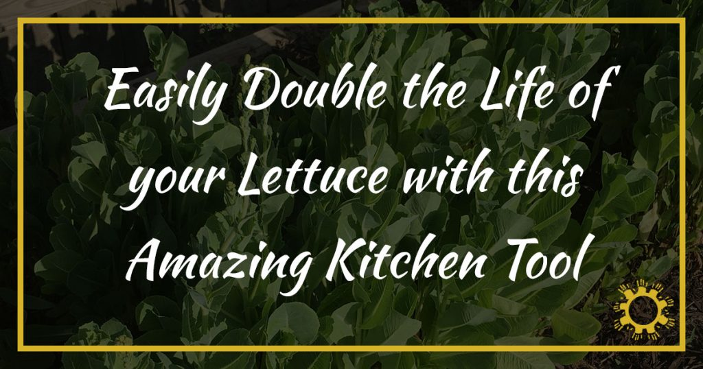 Easily Double the Life of your Lettuce with this Amazing Kitchen Tool