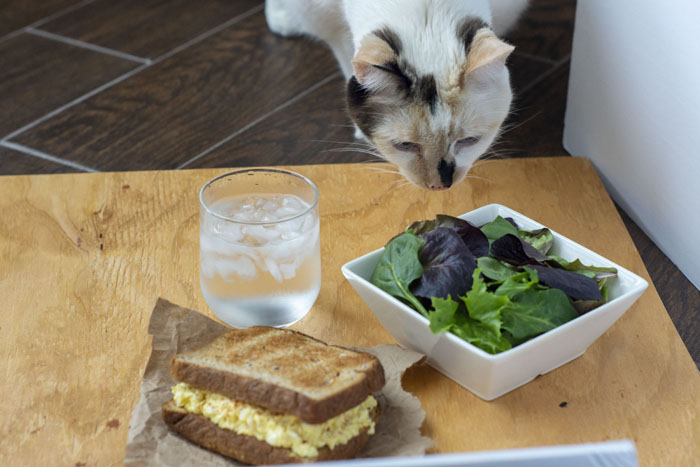 Egg Salad Sandwich next to a salad and glass of water on a wooden board with a curious siamese cat sniffing at the bowl