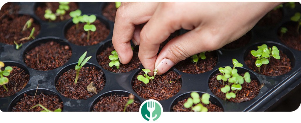Close up of hand planting sprouts (with logo overlay)