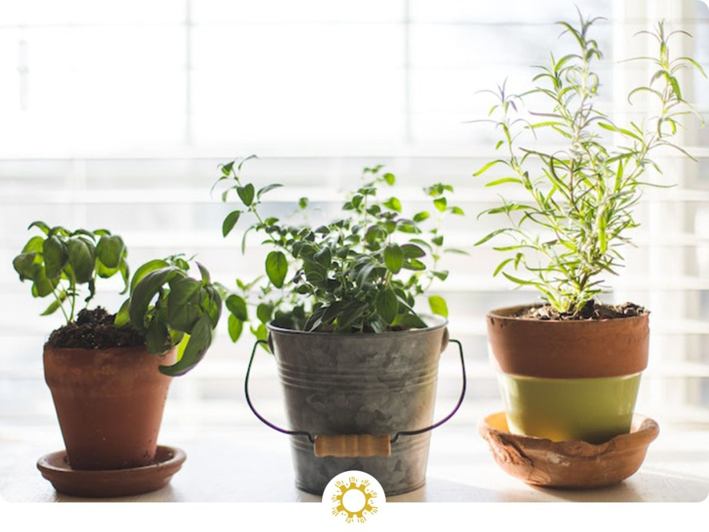 Starting an indoor herb garden is a great way to grow food and cut down on waste. You also eliminate plastic from store-bought herbs.
