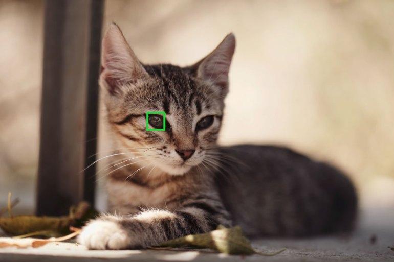 a6400 animal eye-af