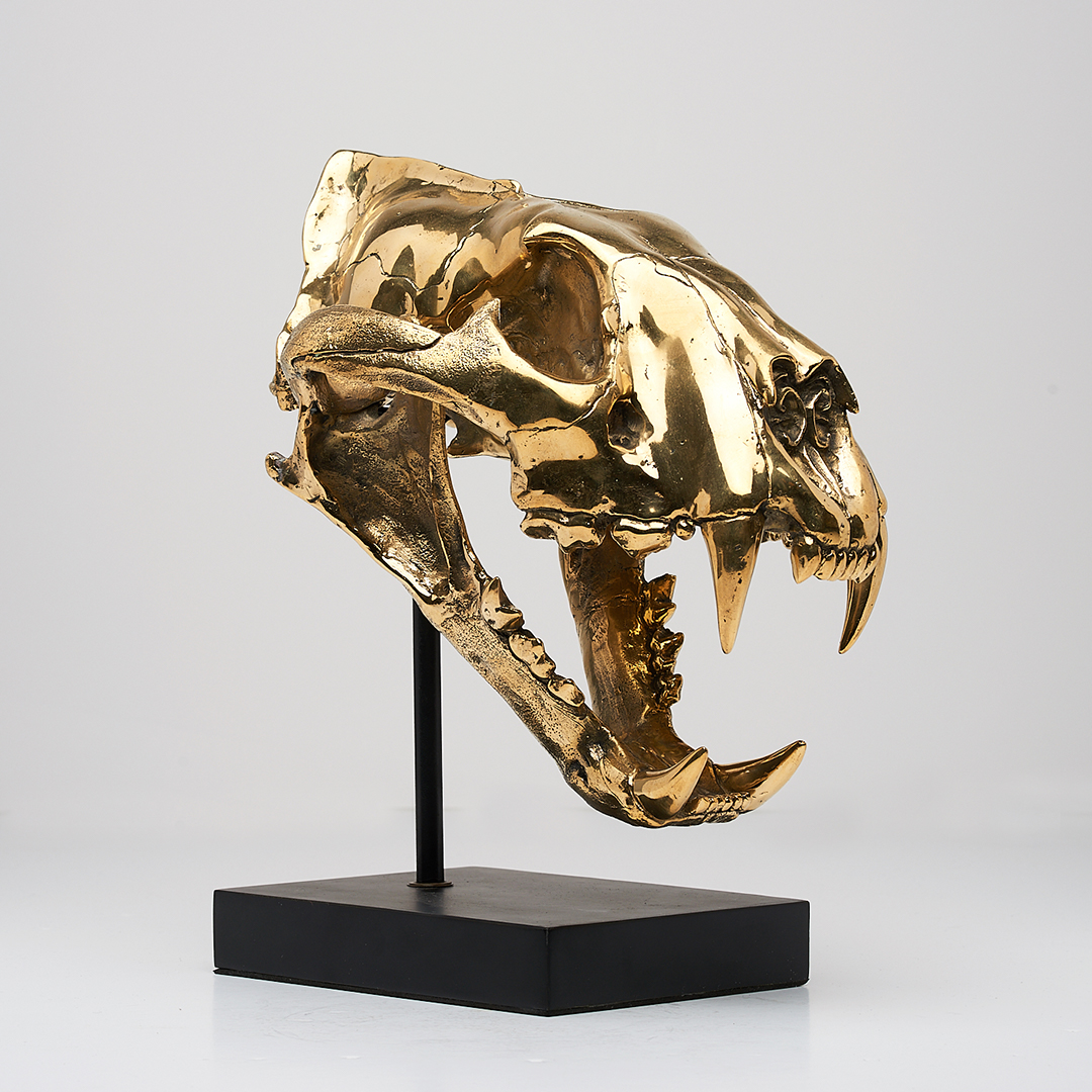 Sumatran Tiger Skull in polished bronze