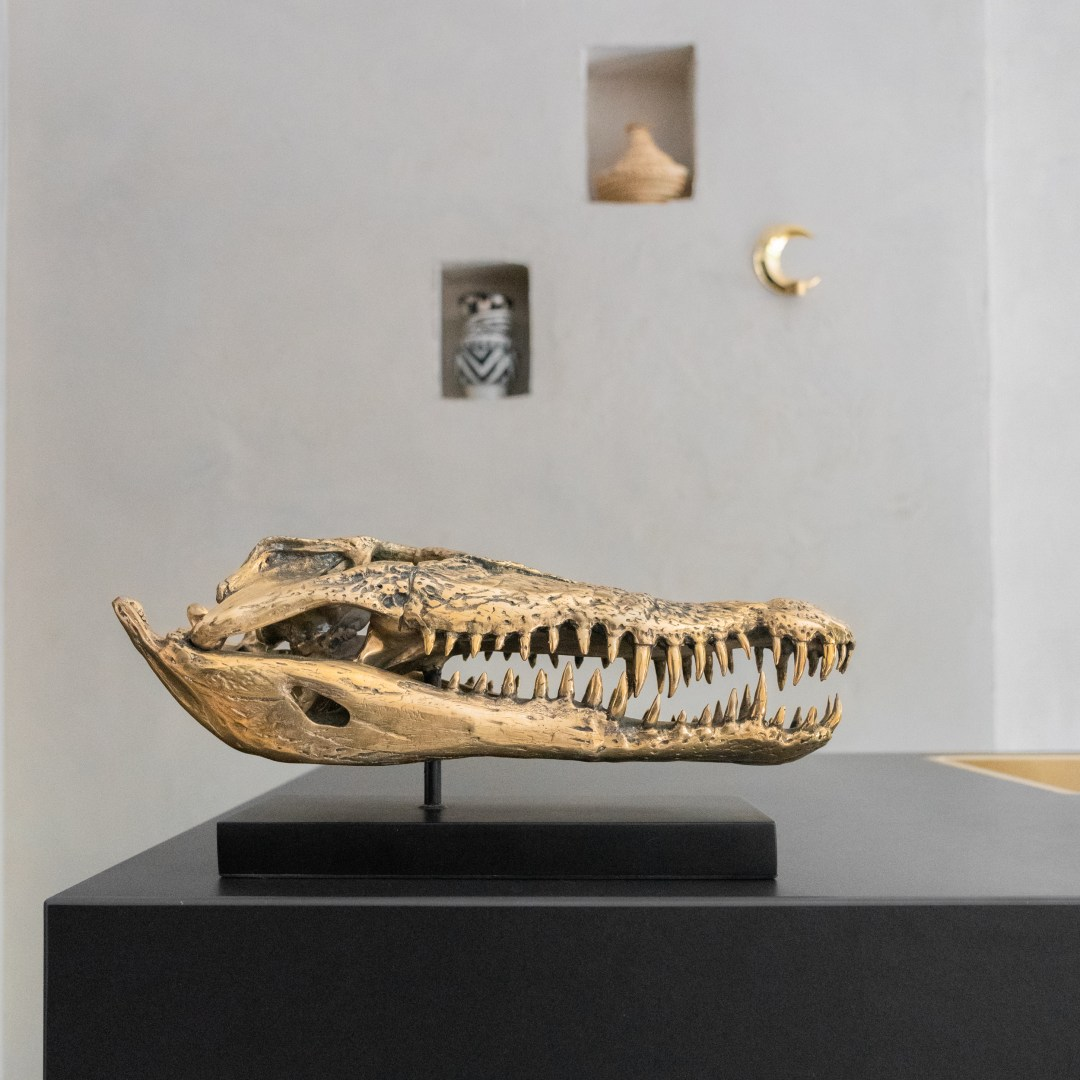 large saltwater crocodile skull in polished bronze