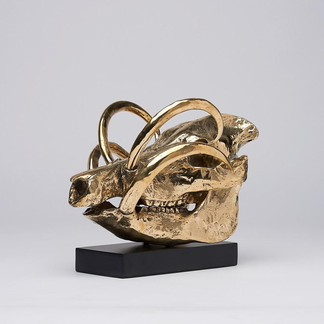 babirusa skull in polished bronze
