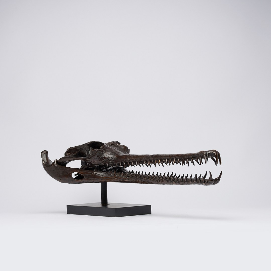 extra large bronze gharial skull