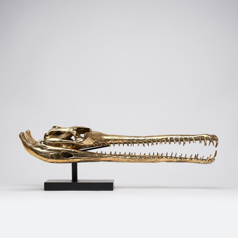 extra large polished bronze gharial skull