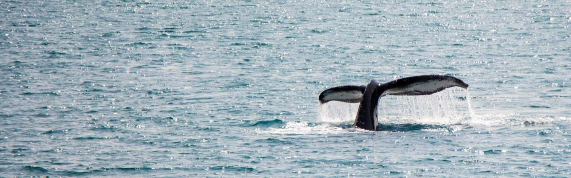 whale-watching-4430682_1920