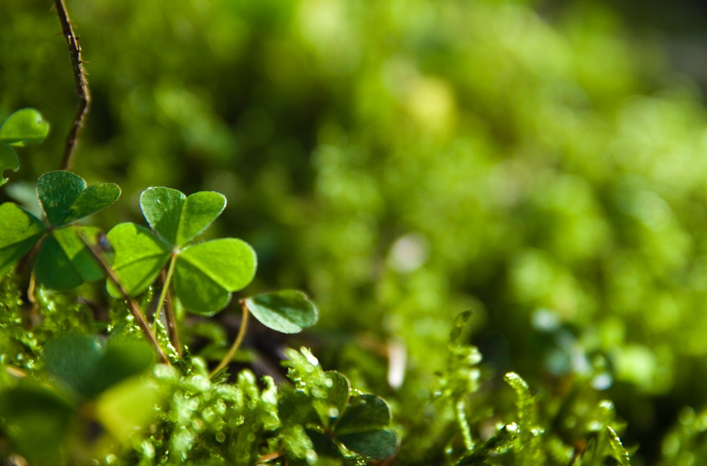 5 Healthy Green Ways To Celebrate St. Patrick's Day