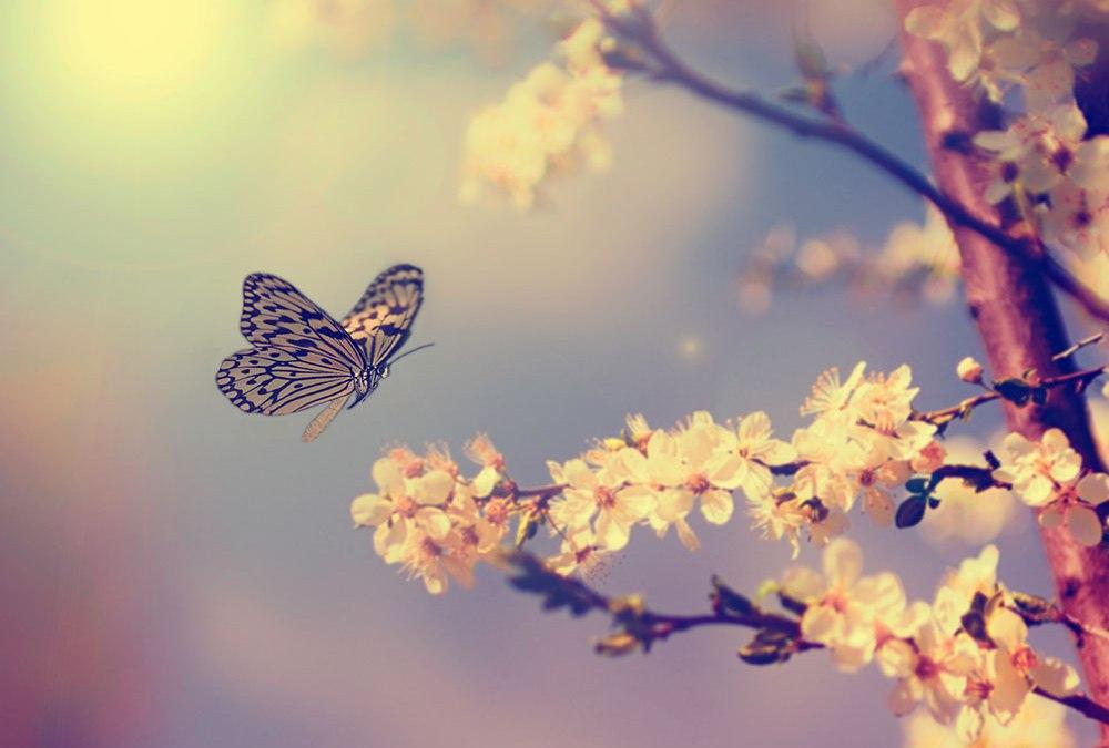Butterflies as Spirit Guides