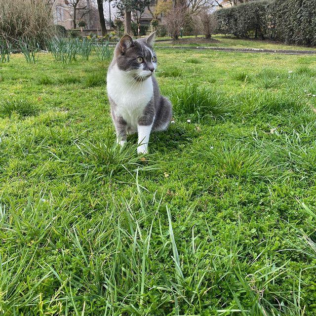 Pixel dans l'herbe