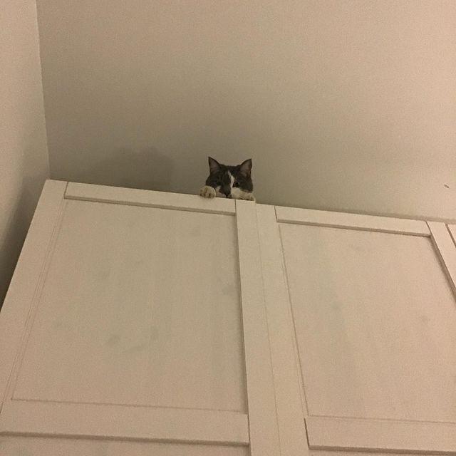 Pixel perché en haut de l'armoire, un petit bout de la tête dépasse