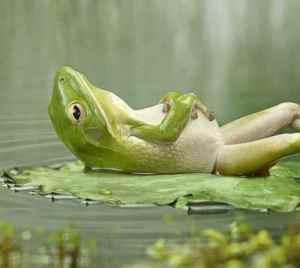 zenfrog