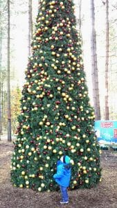 outdoor-christmas-tree