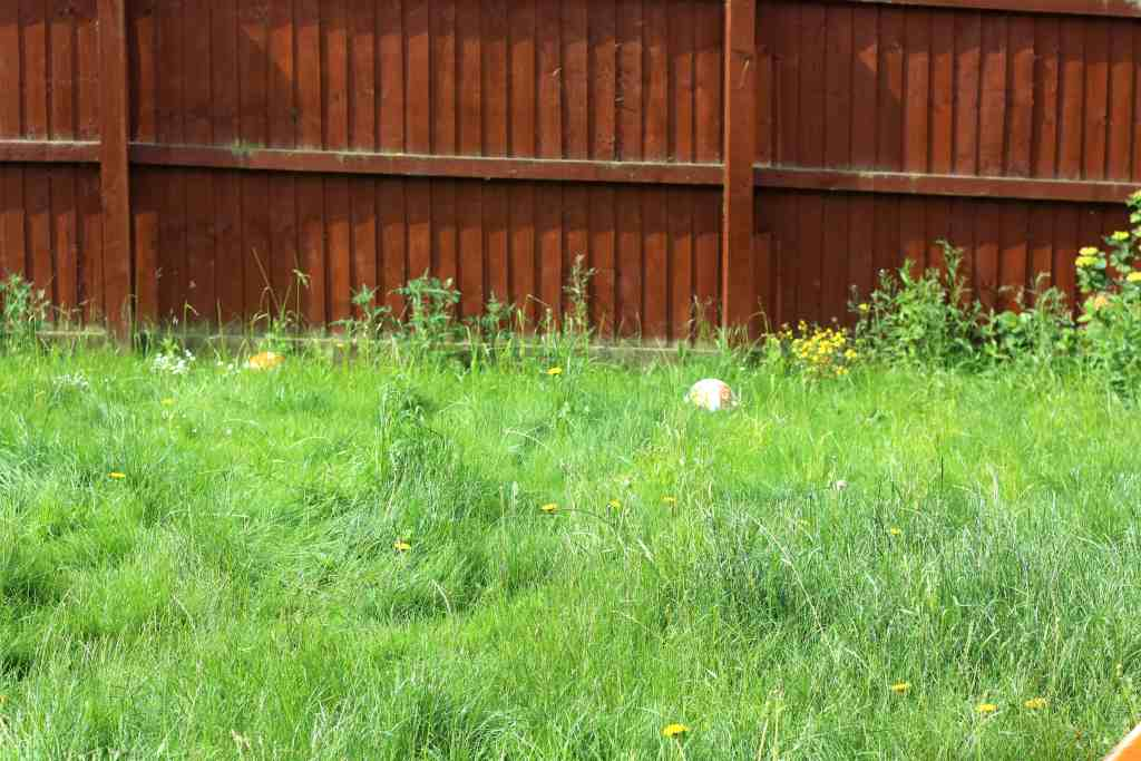 Garden Project – About Time I Got Started