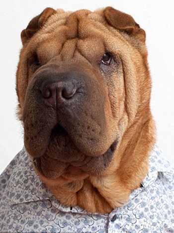 perros_camisas_9