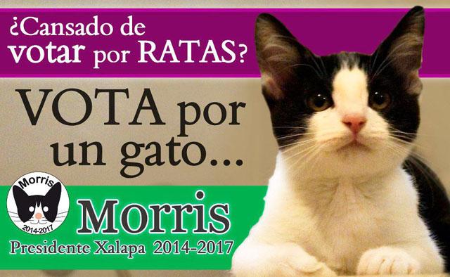 morris_11