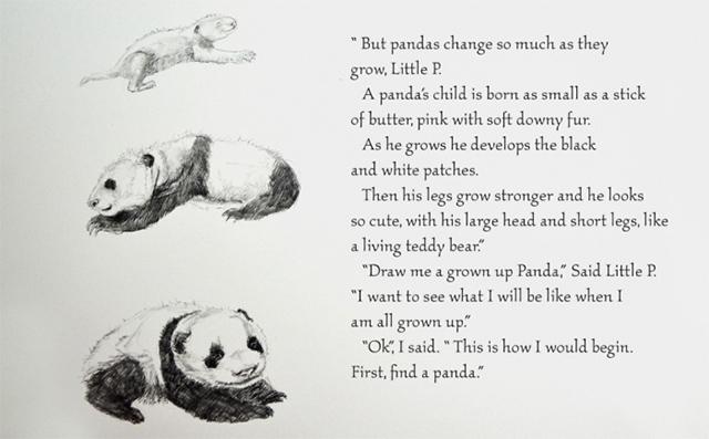 dibujar-panda02