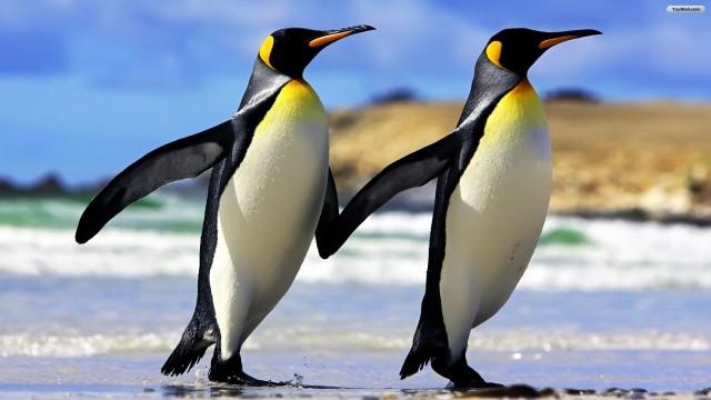 Penguins-image-penguins-36797321-1920-1080