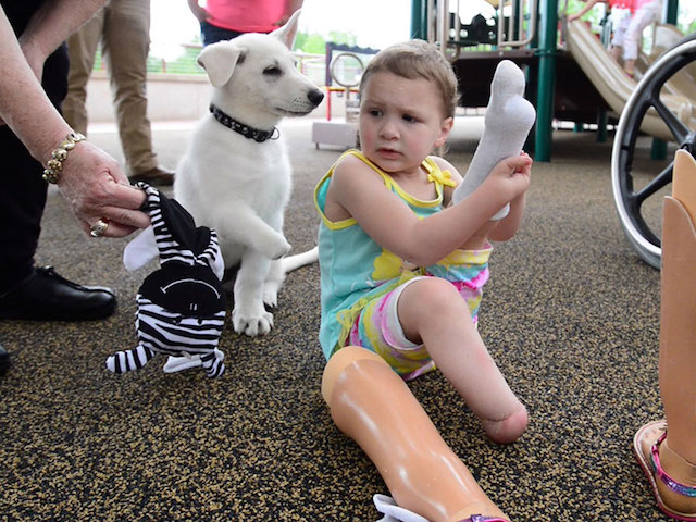 3-year-old-girl-amputated-legs-puppy-without-paw-sapphyre-johnson-lt-dan-13