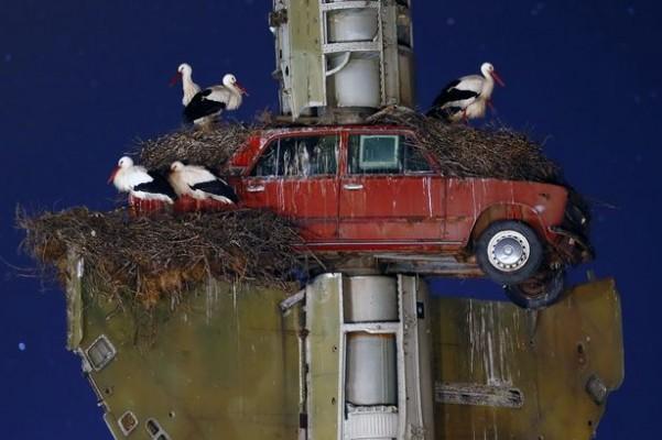 58-Francisco-Mingorance-Stork-art-
