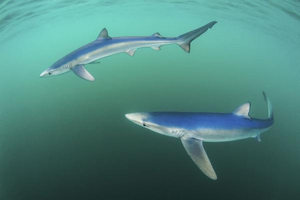 """""""Beautiful Blues"""" de Paul Colley. Categoría: costa y animales marinos."""