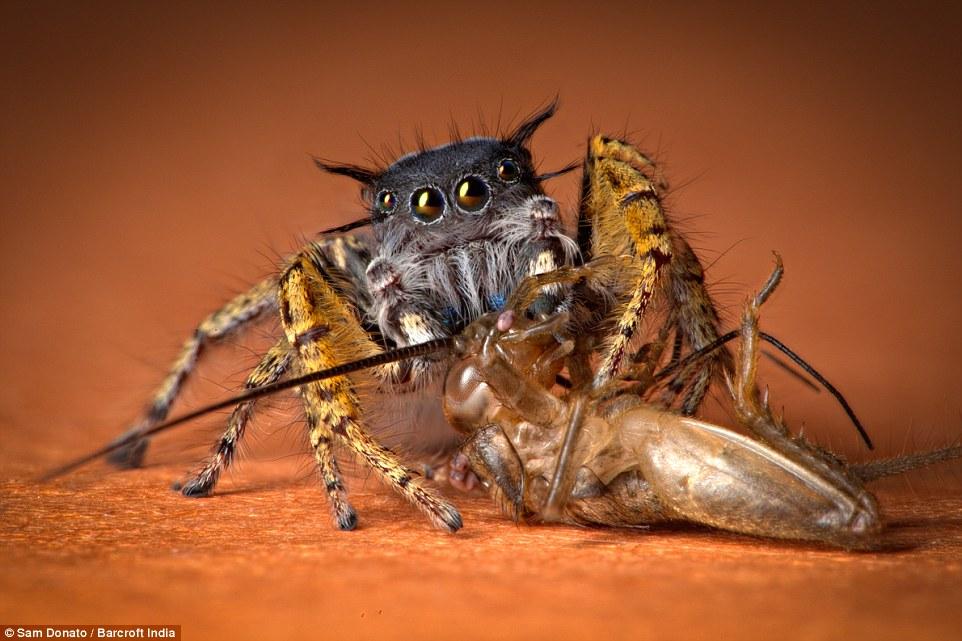 arañas2