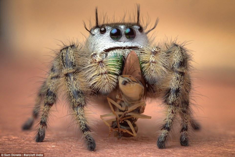arañas4