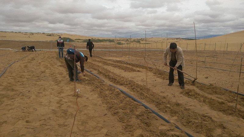 desiertos-fertiles-en-china-1