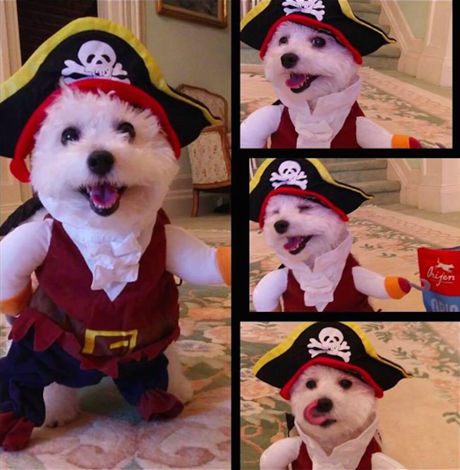 Perrito con disfraz de pirata