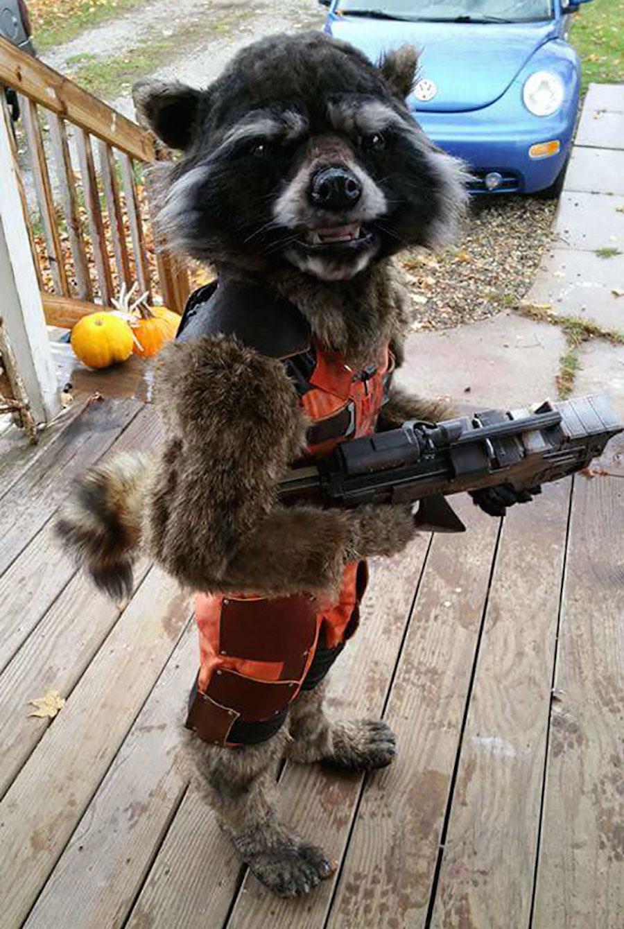 Niño disfrazado de Rocket Raccooon