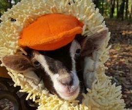 Portada - La cabra Polly