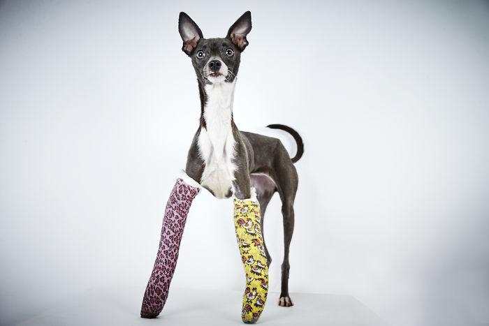 Richard Phibbs retrata perros para ayudarlos a encontrar un hogar
