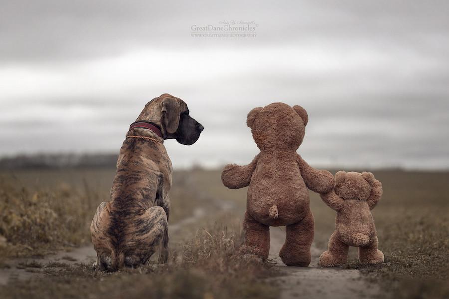 Perrito junto a osos de felpa