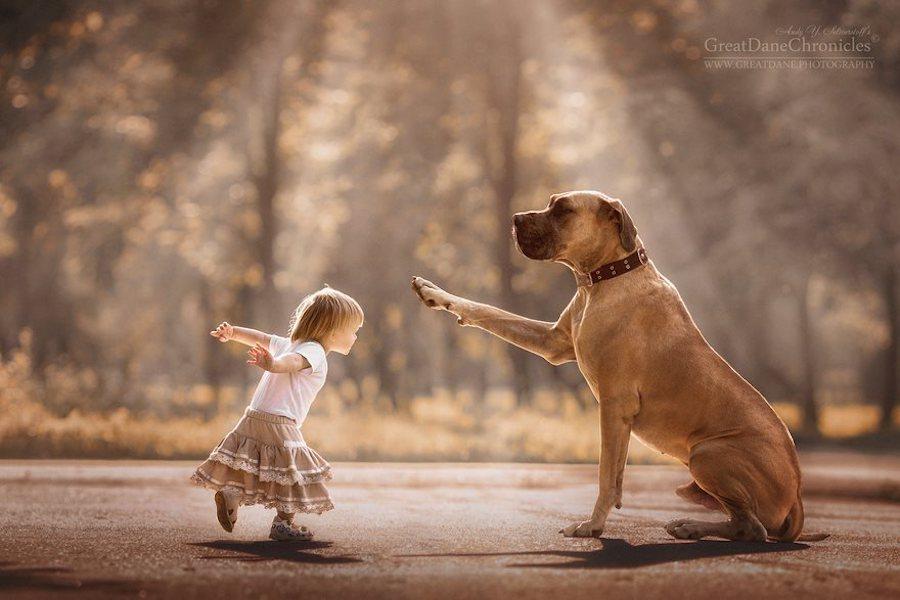 Perrito saludando