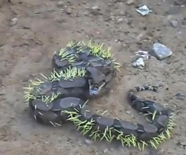 Serpiente llena de espinas