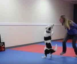 Un baile entre un perro y su adiestradora
