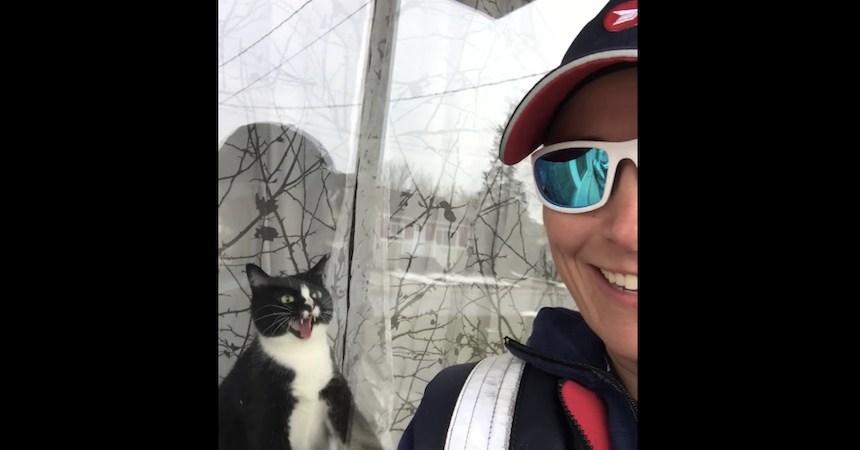 El gatito que odia a la cartera