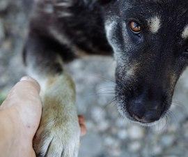¿Hablar con tu mascota es una señal de inteligencia?