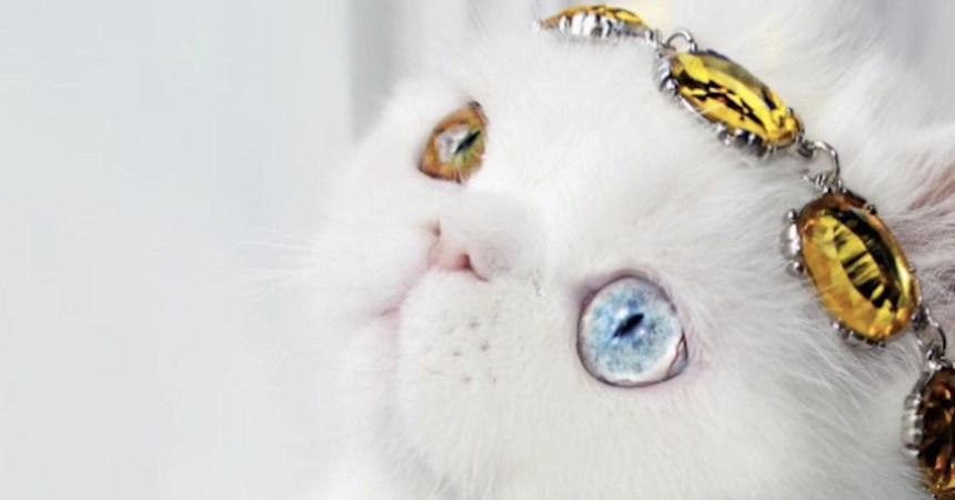Pam, la gatita con los ojos más espectaculares