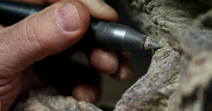 Excavación de un fósil